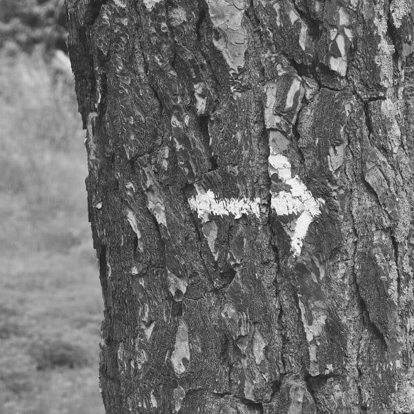 arbre direction trajectoire