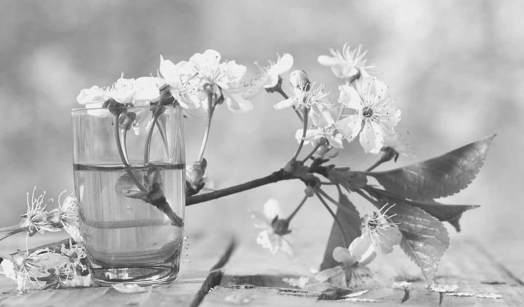 haïku, écrire, poésie, japon, fleurs de cerisier