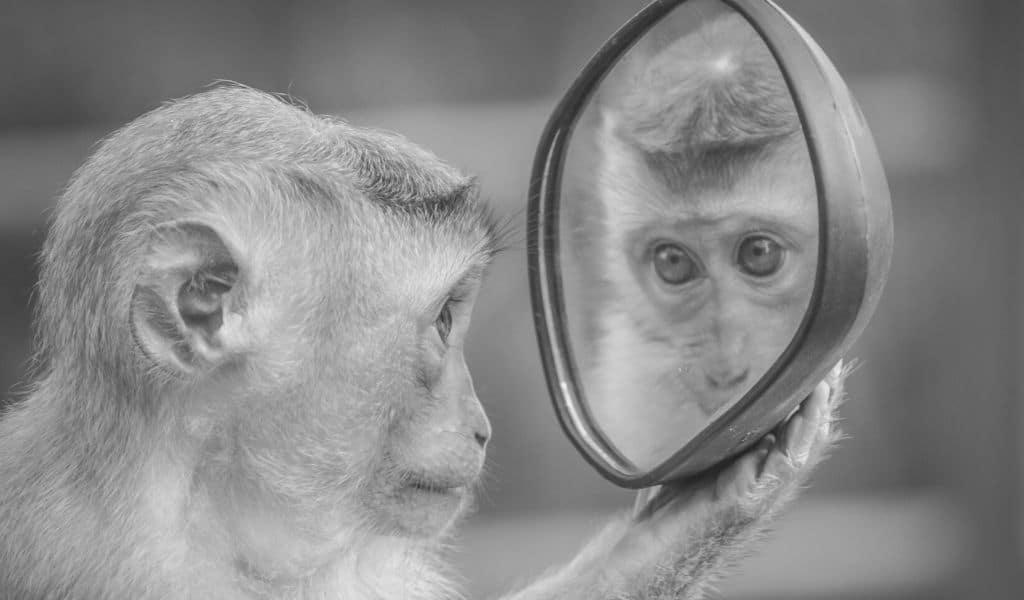 miroir, regard sur soi, acceptation
